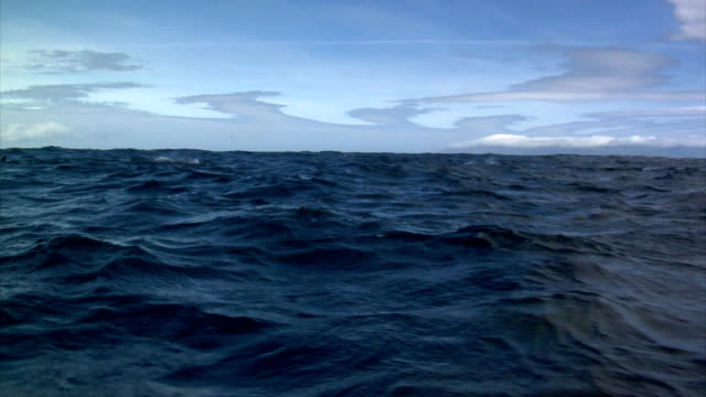 イルカ - アゾレス諸島点の映像素材/bロール