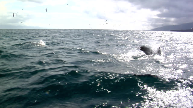dolphins - whale watching stock videos & royalty-free footage