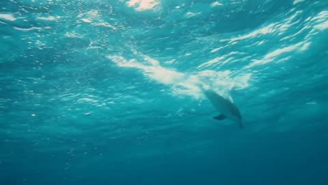 stockvideo's en b-roll-footage met dolphins - dolfijn