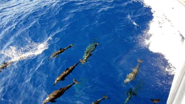 vídeos y material grabado en eventos de stock de los delfines - delfín hocico de botella