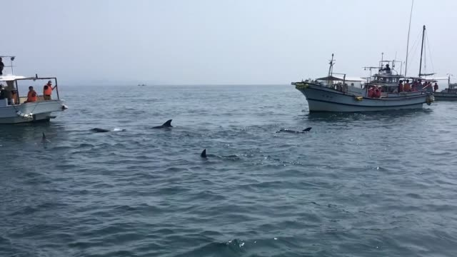 dolphin-watching - north pacific stock videos & royalty-free footage