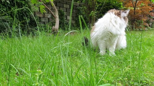domestic cat catching mouse - siberian mouse stock videos & royalty-free footage