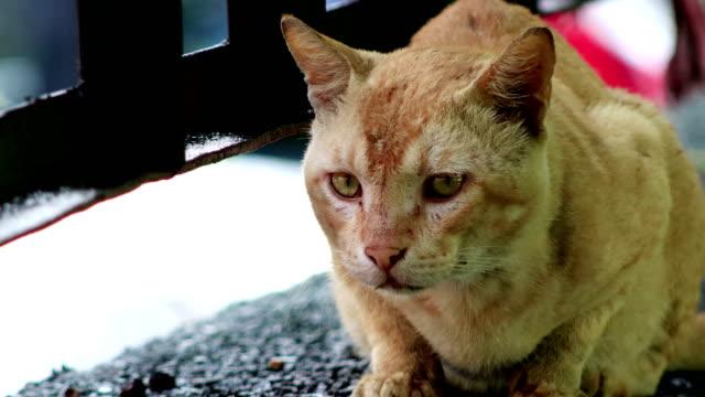 vídeos y material grabado en eventos de stock de gato doméstico relajante en la pared de hormigón - pared de cemento
