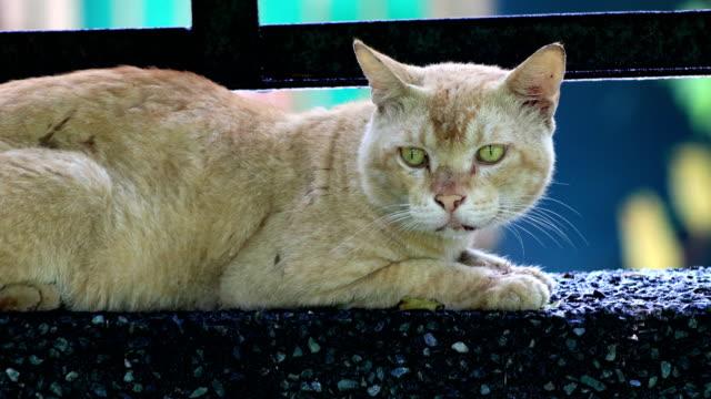 vídeos y material grabado en eventos de stock de gato doméstico sentado en la pared de hormigón - pared de cemento