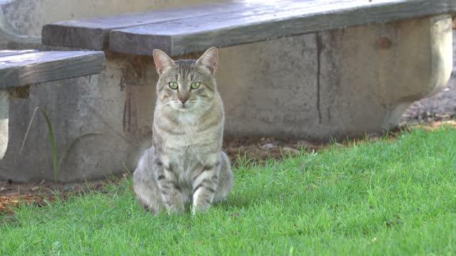 vídeos de stock, filmes e b-roll de domestic cat - domestic animals