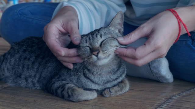 vídeos de stock, filmes e b-roll de gato doméstico - gato doméstico