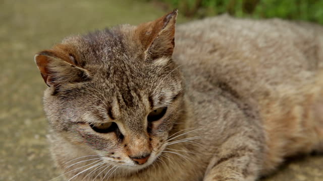 domestic cat,close up - rodent stock videos & royalty-free footage