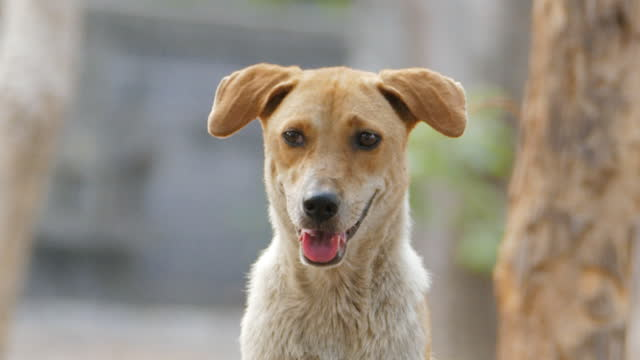 家畜犬、野良犬。 - 迷子の動物点の映像素材/bロール