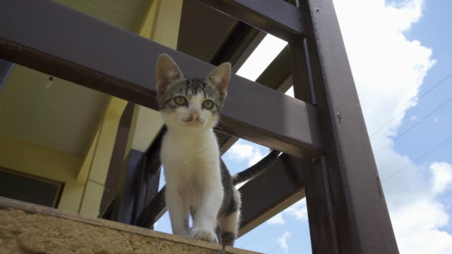 A Domestic Kitten on a balcony.