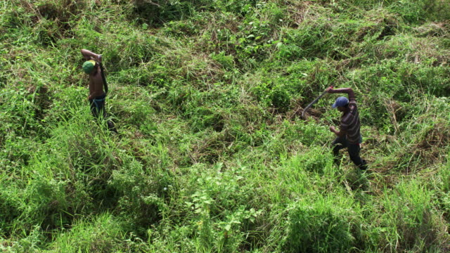 dominican republic: deforestation and weed control - dominican republic stock videos and b-roll footage