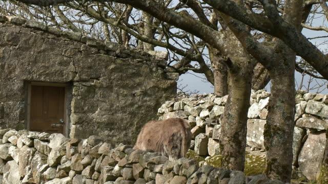 donkey behind stone wall - 地衣類点の映像素材/bロール