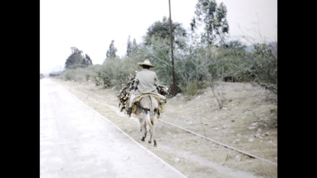 donkey carrying pile of branches followed by old man on another donkey traveling on the country road - ウマ科点の映像素材/bロール