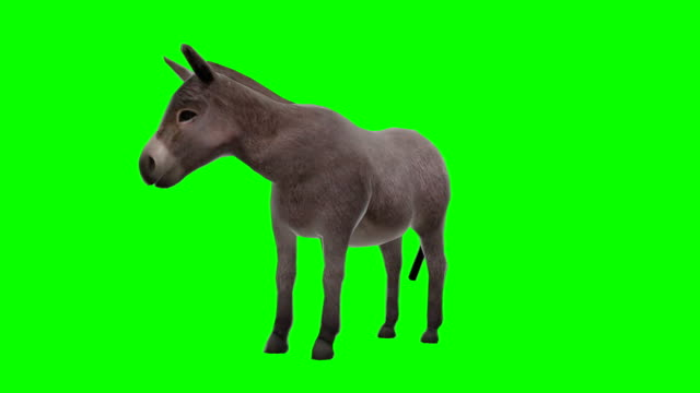 donkey chewing green screen (loopable) - donkey stock videos & royalty-free footage