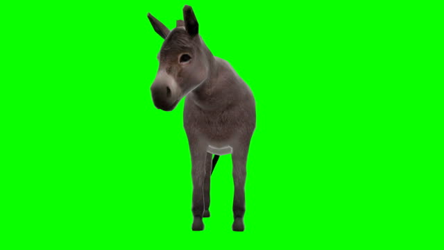 Donkey Chewing Green Screen (Loopable)