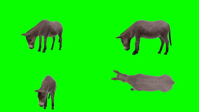 donkey eating green screen (loopable) - donkey stock videos & royalty-free footage