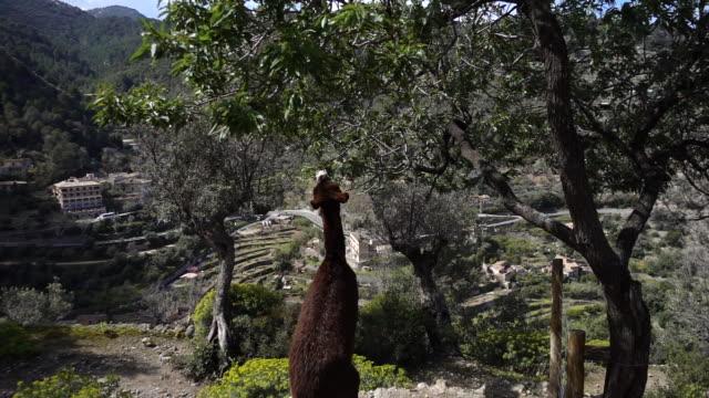 donkey eating leaves. - the spanish donkey stock videos & royalty-free footage