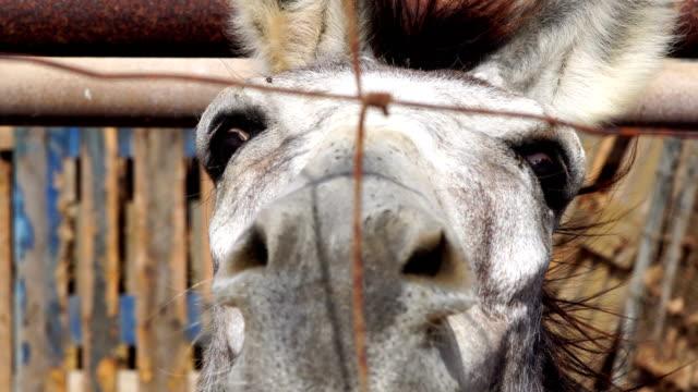 donkey from fuerteventura - canary islands - the spanish donkey stock videos & royalty-free footage