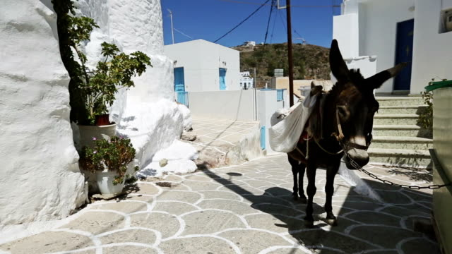 donkey in greece small village street - donkey stock videos & royalty-free footage