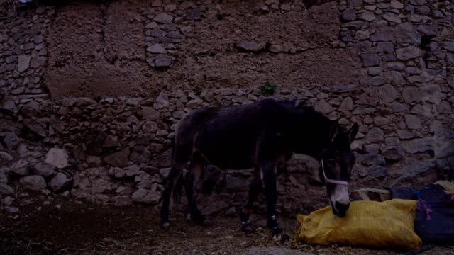 donkey in mountain village - mule stock videos & royalty-free footage