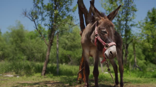 donkey in village - donkey stock videos & royalty-free footage