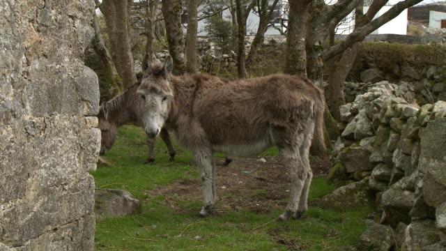 donkey looking at camera - hoof stock videos & royalty-free footage