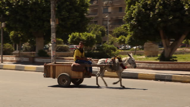vídeos y material grabado en eventos de stock de donkey pulling cart across busy street. cairo is the capital city of egypt. it is home to 9.5 million people who predominantly follow islam. - egipto