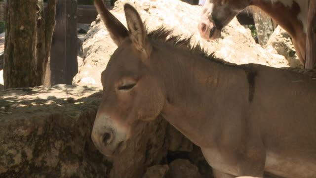 vídeos y material grabado en eventos de stock de cu, donkey standing by rocks, playa del carmen, quintanaroo, mexico - playa del carmen
