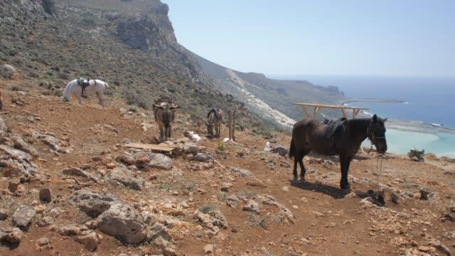 Donkey taxi near Balos Beach, Gramvoussa Peninsula, Balos Bay, Gramvousa Peninsula, Crete, Greek Islands, Greece, Europe