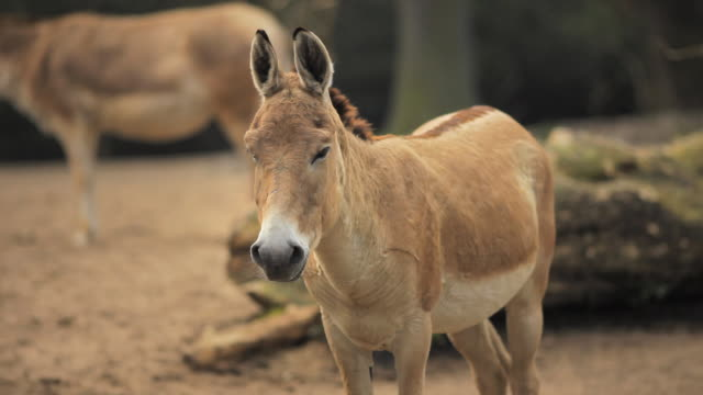 donkey - donkey stock videos & royalty-free footage