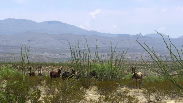 donkey - アジア野ロバ点の映像素材/bロール