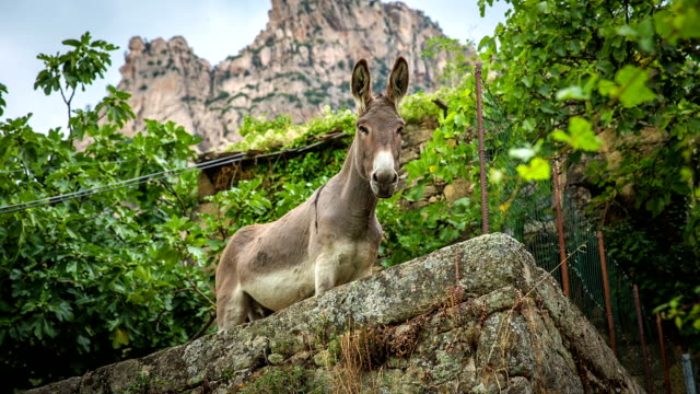 vídeos y material grabado en eventos de stock de burro - burro