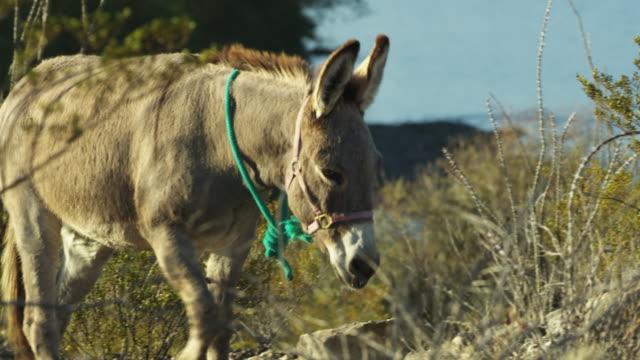 donkey walking between bushes - 馬勒点の映像素材/bロール