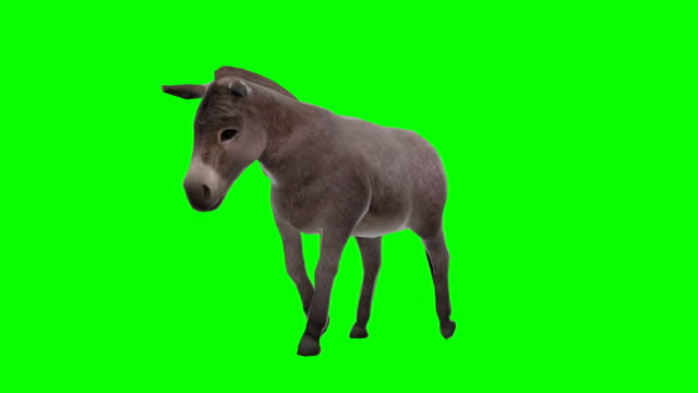 Donkey Walking Green Screen (Loopable)