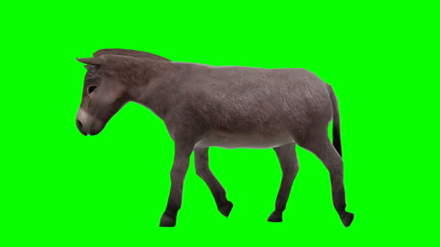 donkey walking green screen (loopable) - donkey stock videos & royalty-free footage
