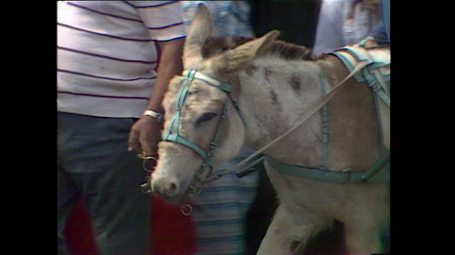 donkeys and donkey rides at british beach; 1978 - 1978 stock videos & royalty-free footage