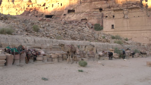 Donkeys expecting tourists for a ride among ancient remains in Petra, Jordan