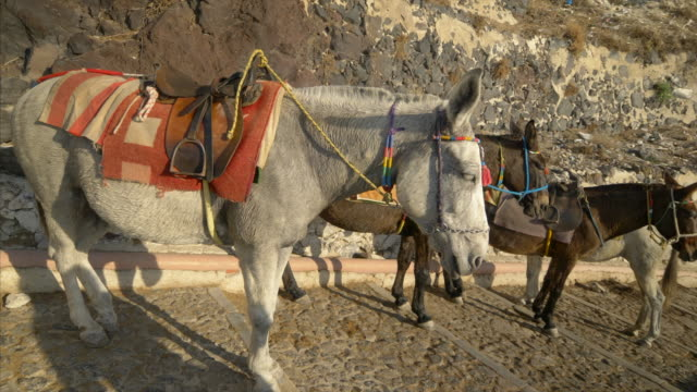 stockvideo's en b-roll-footage met donkeys in santorini, greece are used to bring tourists up the steep cliff to the town of oia - oia santorini