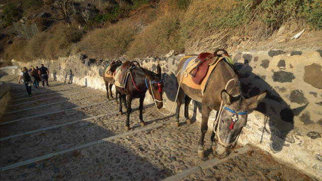 vídeos de stock, filmes e b-roll de donkeys in santorini, greece are used to bring tourists up the steep cliff to the town of oia - oia santorini
