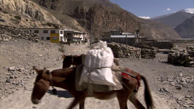 vídeos y material grabado en eventos de stock de donkeys laden with bundles wander around a quiet village. available in hd. - burro