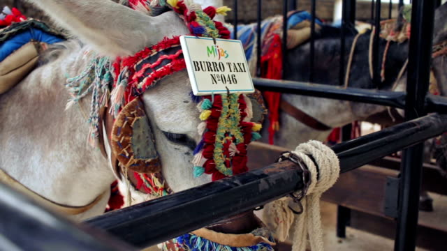 donkeys that work as taxis tied waiting their turn - the spanish donkey stock videos & royalty-free footage