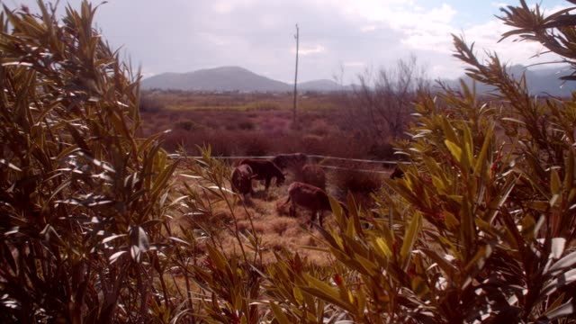 donkeys - the spanish donkey stock videos & royalty-free footage