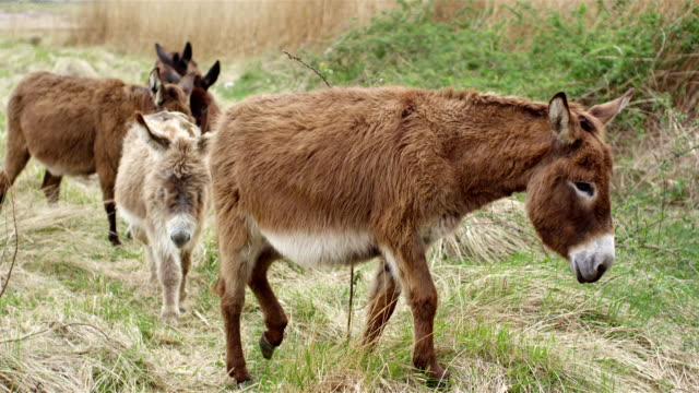 donkeys - donkey stock videos & royalty-free footage