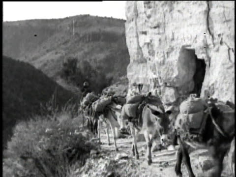 1921 montage donkeys walking around rocky path with packs on their back while a man walks behind them / chrysotile, arizona, united states - アスベスト点の映像素材/bロール
