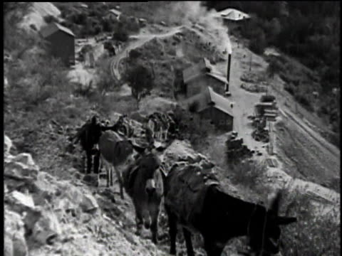1921 MONTAGE Donkeys walking up rocky path then leaving tunnel with packs on their backs / Chrysotile, Arizona, United States