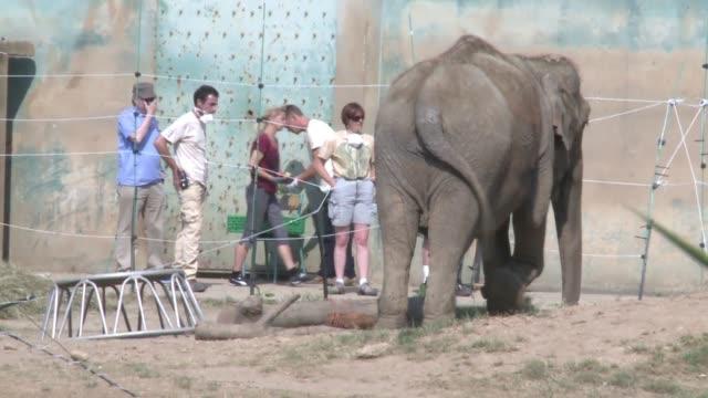 dos elefantes evitaron la eutanasia a la que estaban condenados en francia por sospecha de tuberculosis luego de que la princesa estefania de monaco... - tuberculosis stock videos and b-roll footage