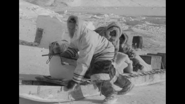 doug wilkinson making igloo with aboriginal people / huskies eating chunks of meat on snowcovered ground / wilkinson standing next to aboriginal... - igloo stock videos & royalty-free footage