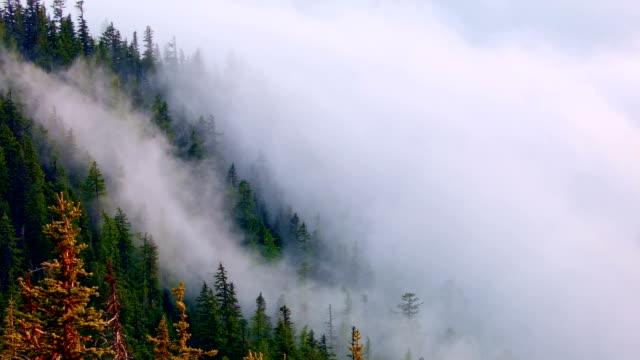 douglas fir forest and mist inversion mt. hood oregon cascades 6 - douglas fir stock videos and b-roll footage