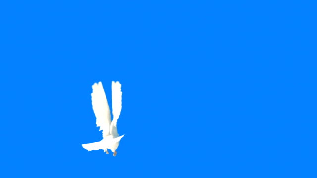 dove flying on blue background (super slow motion) - symbols of peace stock videos & royalty-free footage