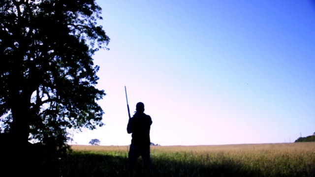 dove hunting  - no birds - bird hunting stock videos & royalty-free footage