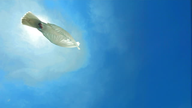 dove of peace flying over sky (super slow motion) - flying stock videos & royalty-free footage